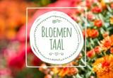 bloementaal-chrysant-kop